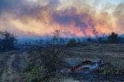 Российское консульство рассказало оситуации вокруг лесных пожаров вТурции