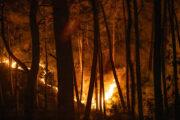 Названа возможная причина лесных пожаров в Турции: Происшествия: Мир: Lenta.ru